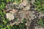 Oak leaves in greenery