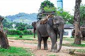Portrait Of Asiatic Elephant, Thailand