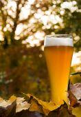Bavarian Weissbier Between Autumnal Leaves
