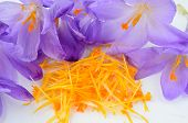 stock photo of saffron  - Saffron or Crocus sativus close up view on heap of spicy stamens and pestle surrounded by crocus flowers waiting in process of spice production - JPG