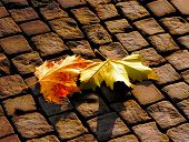 The Autumn Leaves On  Pavement