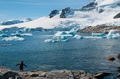 Antarctica With Snow Covered Mountains And Single Gentoo Penguin