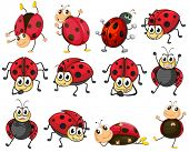 Illustration of the cute ladybugs on a white background