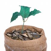 Money Bag With Coins And Money Tree Isolated At A White Background