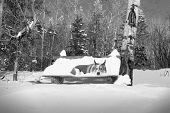 Snow Dog On A Park Bench