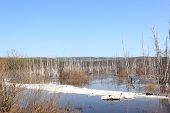 river spilled Barga spring