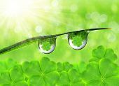 Fresh dewy green grass