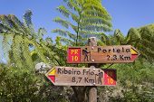 Signpost in Madeira's (Portugal) bush