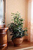Indoor Plant In The Pot In Interior