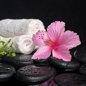 Beautiful Spa Still Life Of Pink Hibiscus, Branch Fern, Drops And Towels On Zen Stones With Reflecti
