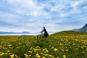 stock photo of lofoten  - Mountain bike cyclist at flowered field, Lofoten, Norway