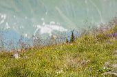 Flowers And Lake, Austria