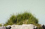 Grass By Lake