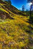 Wildflowers in Merced River Canyon