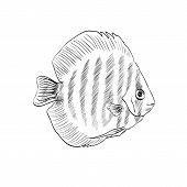 sketch of a fish