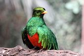 a wonderful example of quetzal