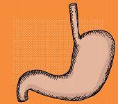 stock photo of human stomach  - Single human stomach organ cartoon over halftone - JPG