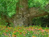 Old Tree With Eyes, Keeper Of The Garden