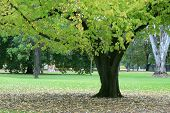 Green Leafy Tree