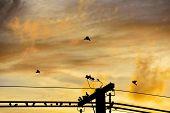 Silhouettes Orange Sky. Sunset Photo As Background
