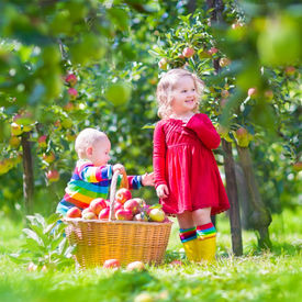 stock photo of hand-barrow  - Happy little children toddler girl and funny baby boy brother and sister playing together in a beautiful fruit garden eating apples next to a big basket on a warm autumn day outdoors - JPG