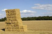 pic of briquette  - Briquettes of dry hay in a field in the north of France - JPG