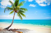 foto of beach hut  - tropical beach with coconut palm - JPG