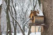 Wooden birdhouse.
