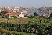 View of the historic city of Porto with the Dom Luis bridge