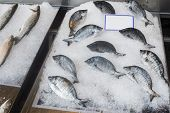 picture of piraeus  - Fish on ice in the market - JPG