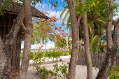 Tropical Trees On The Island