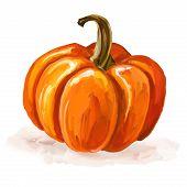 Pumpkin vector illustration  hand drawn  painted watercolor