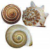 image of fibonacci  - Colorful seashells on a white background  isolated - JPG