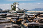 The sea lions on the piers, San Francisco