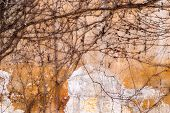 Dry Trunks And Branches Creeping Rasteniyya, Without Ivy Leaves On An Old Stone Wall, Draws A Strict