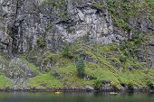 stock photo of greenery  - Kayaking in Norway - JPG