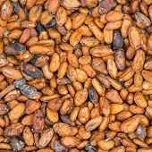 pic of cocoa beans  - Pattern of the cocoa beans background - JPG