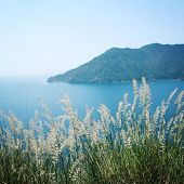 pic of dry grass  - View on Adrasan Bay from the road towards Sazak Bay - JPG