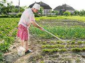 foto of hoe  - Poor farmer hoeing vegetable garden in springtime - JPG