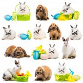 stock photo of dwarf rabbit  - photo collage rabbit Easter eggs in a basket on a white background - JPG