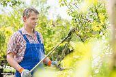 stock photo of tree trim  - Gardener trimming tree branches at plant nursery - JPG
