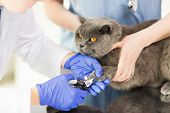 ������, ������: medicine pet animals grooming and people concept close up of veterinarian doctor with clipper c