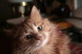 Cat Portrait #2.