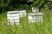 Beehives