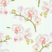 Seamless Texture Branches Orchid Phalaenopsis White Flowers Tropical Plants Green Stem And Buds And  poster