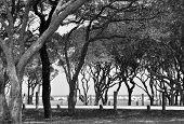 Bäumen Futter Ozean schwarz-weiß Bild bw