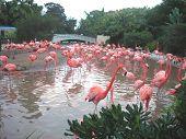 Pond Of Flamingos