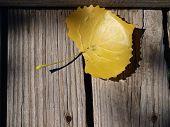 Gold Leaf on Warf