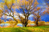 Landscape painting - trees beside the river