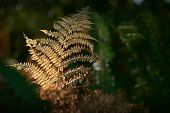 Forest Fern Pacific Northwest. Sun Hits Ferns On A Tree In A Temperate Rainforest Of The Pacific Nor poster